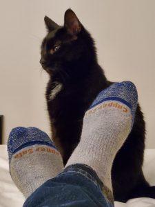 Ewok, #Cats of Costco