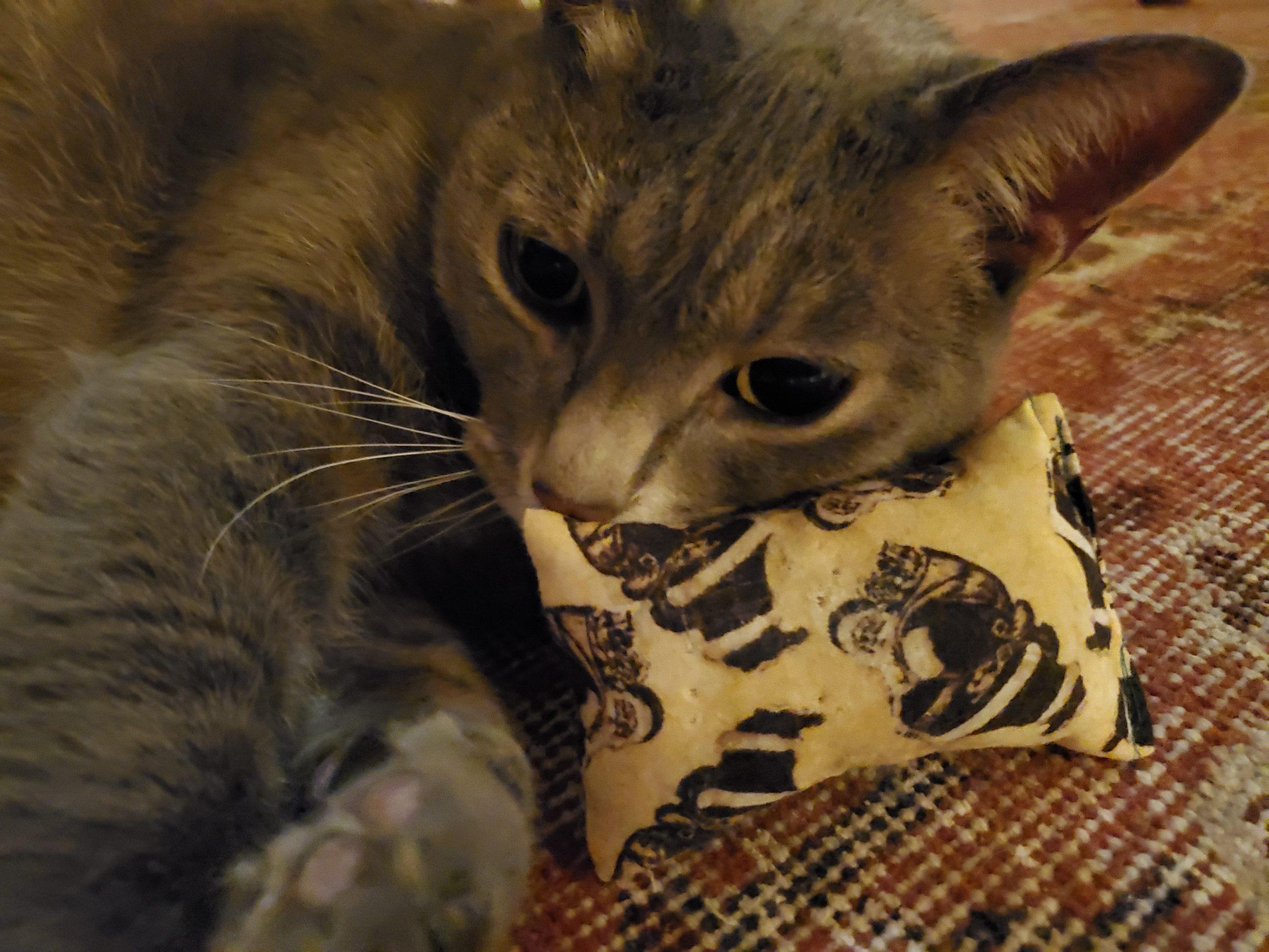 cats of costco