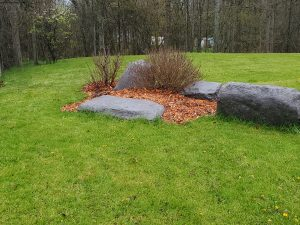 mulched garden