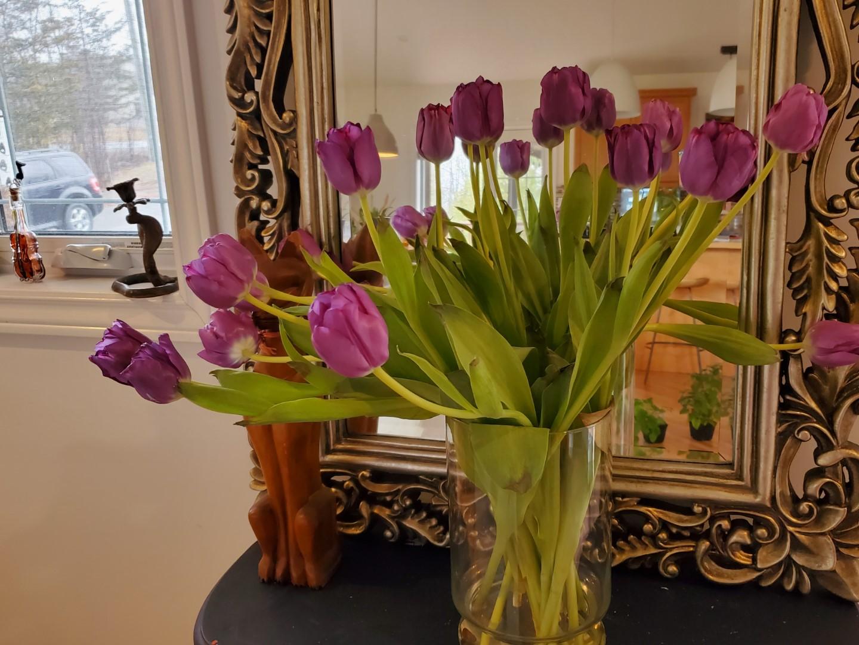 costco tulips